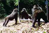 Wild Animals See Themselves In A Mirror For The First Time